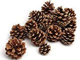 NaDeco Tannenzapfen ca. 5-6cm 1kg Pinus nigra...