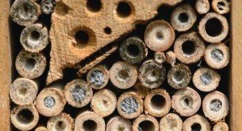 Insektenhotel Löcher verschlossen