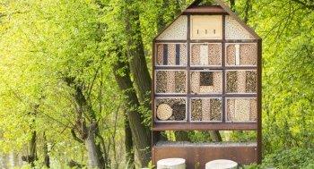 Insektenhotel Sinn und Zweck