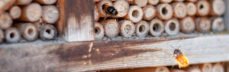 Insektehotel wann kommen die insekten