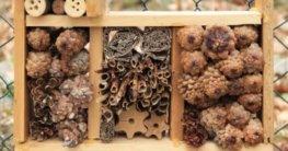 Tannenzapfen im Insektenhotel
