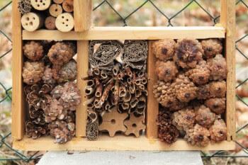 Insektenhotel Material sammeln