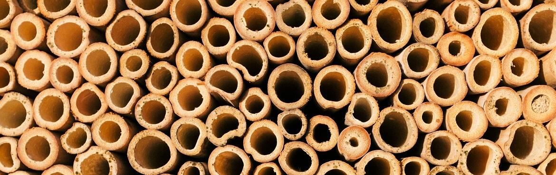 Wie groß müssen die Löcher im Insektenhotel sein