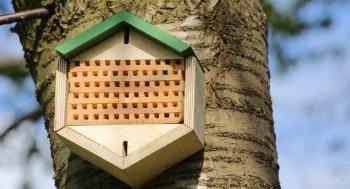 Insektenhotel am Baum befestigen
