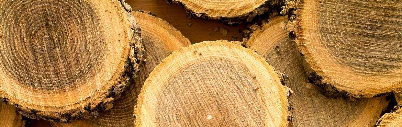 Insektenhotel aus Baumscheibe bauen
